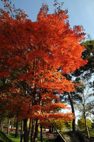 Oct_21_2008_05