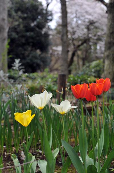 Apr_06_2009_02